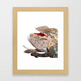 A Chameleon With Open Mouth Isolated Framed Art Print