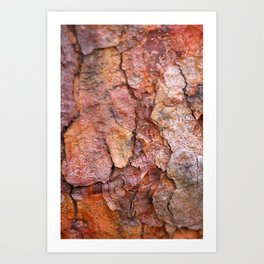Arboretum Bark Art Print