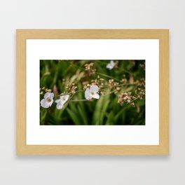 Soft White Framed Art Print