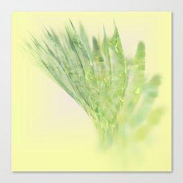 fresh vegetable Canvas Print
