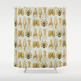 Ernst Haeckel's Gamochonia  Shower Curtain