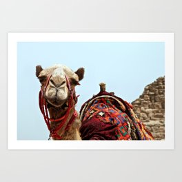 Desert Camel Art Print