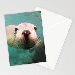 Australian Sea Lion Neophoca cinerea Stationery Cards