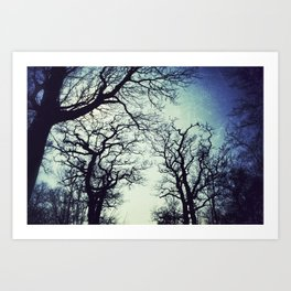 Silhouetted Trees Art Print