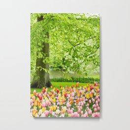 Tulip Garden in Amsterdam Metal Print