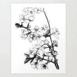 Cherry Blossoms Minimal Drawing Art Print