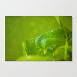 Verte Canvas Print