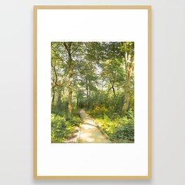 Woodland Path Framed Art Print