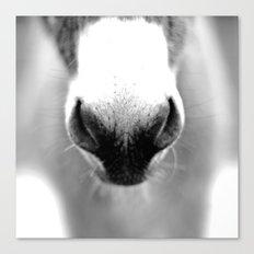 Donkey Nose Canvas Print