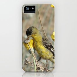 Mr. Lesser Goldfinch Feeds on Seeds iPhone Case