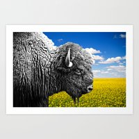 Bison in Yellow Field Art Print