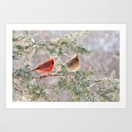 Hoarfrost Cardinals Art Print