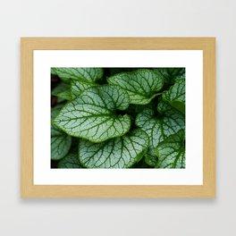 Variegated Brunnera Leaves Framed Art Print