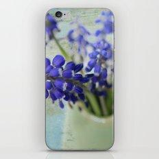 Grape Hyacinths iPhone & iPod Skin