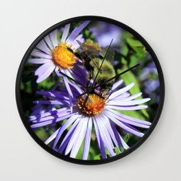 Pollen Dusted Bee on Asters Wall Clock