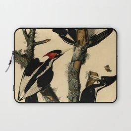 Ivory-billed Woodpecker (Campephilus principalis) Laptop Sleeve
