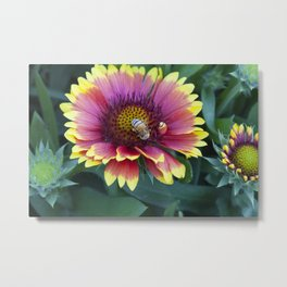 Red Sunflower with working Bee Metal Print