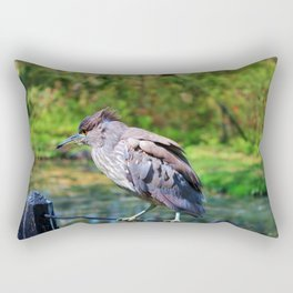 Immature Night Heron Rectangular Pillow