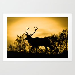 The King at Sunset Art Print