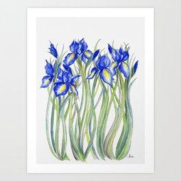 Blue Iris, Illustration Kunstdrucke