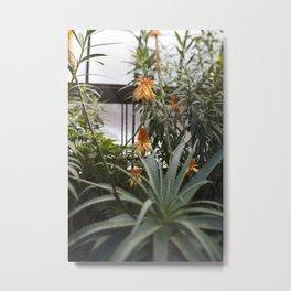 Aloe in Bloom Metal Print