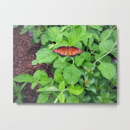 Monarch Butterlfy on Leaves Metal Print