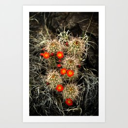Southwest Cactus Flowers Art Print