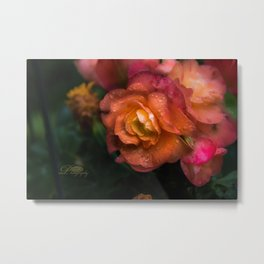 Begonia Droplets Metal Print