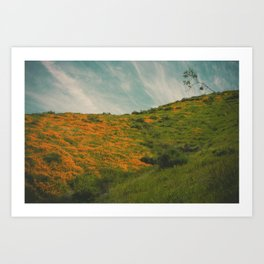 California Poppies 017 Art Print