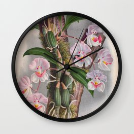 Aganisia Cyanea Little Pink Orchids Wall Clock