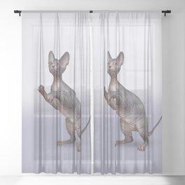 Drawing Sphynx kitten Sheer Curtain