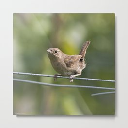 Mad Mama Wren Metal Print