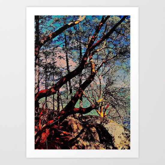 Arbutus Trees, Stoney Hill Sunset Art Print