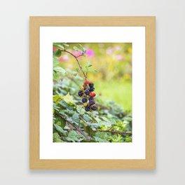 Blackberry. Framed Art Print