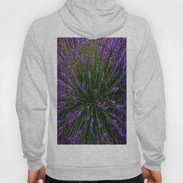 Lavender Field Of Dreams  Hoody
