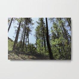 Stretch - Pines in Northern Arizona Metal Print