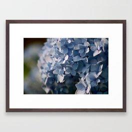 Hydrangea in Blue Framed Art Print