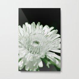 Flower beauty in nature Metal Print