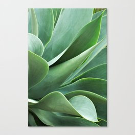 Succulent Shadows Photograph Canvas Print