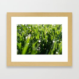 Morning Dew 3 Framed Art Print