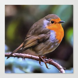 Plump Robin Perched On A Branch Canvas Print