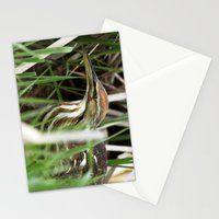 American Bittern - Take One Stationery Cards