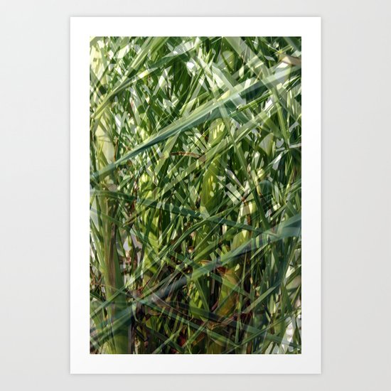 Palm tree foliage Art Print