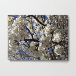 Blooming Tree in Spring Metal Print