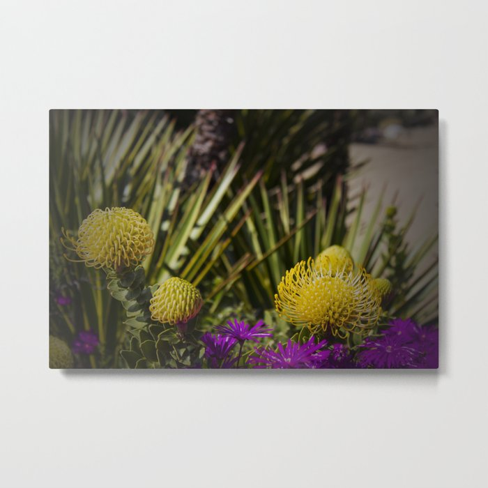 Protea pincushion flowers with vignette Metal Print