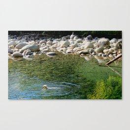 Mountain Dog Canvas Print