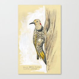 Yellow-shafted Flicker Canvas Print