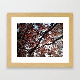 Cherry Blossoms in Seattle Framed Art Print