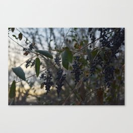 The Wild Thornberries Canvas Print