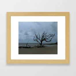 A Ghost Tree On Jekyll Island Beach Framed Art Print